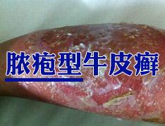 郑州市银屑病研究所网上预约.jpg